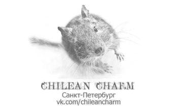 Chilean Charm