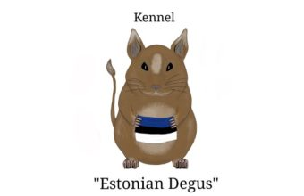 Estonian Degus